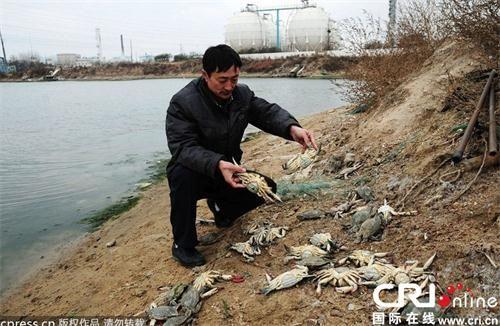 十字路园社区居民孙明良靠近原油泄露海边的养殖池内养殖的螃蟹大量死亡。(来源:国际在线)