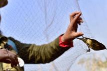 志愿者开展拆除捕鸟网行动