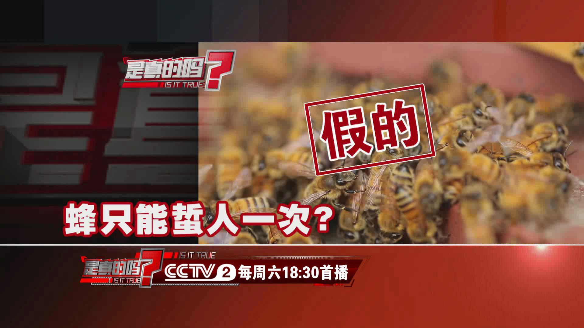 蜂只能蜇人一次?专家:因蜂而异,多数蜂并非如此