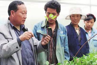 18年如一日扎根西藏 助白朗县瓜果飘香
