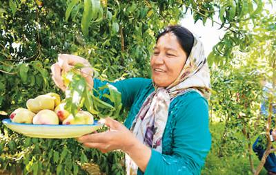 新疆策勒:绿树环绕沙漠村庄