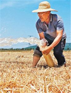 农民积极抗旱保苗