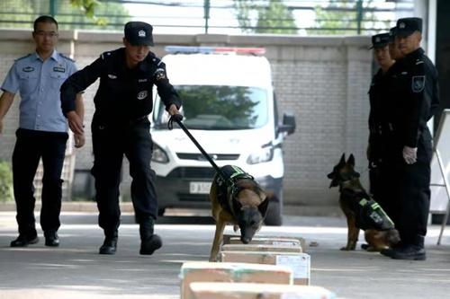 中国警犬又添新技能可搜索新型炸药与枪弹