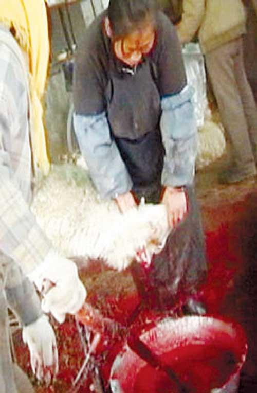 屠宰场卫生调查:装卸工对着羊肉撒尿--社会--人