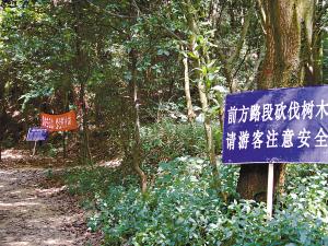 设有红色的宣传标语、施工警示牌等.-广州白云山砍树调查 为栽防
