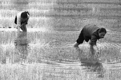 农村部分留守妇女生活状况调查