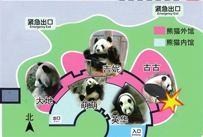 教画大熊猫的步骤