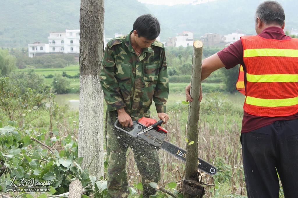 清图集广西平乐砍伐路树