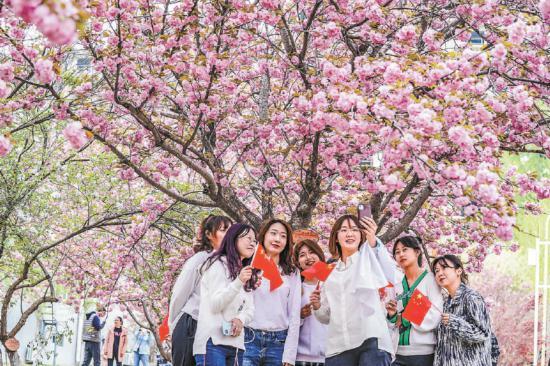 京郊赏樱正当时